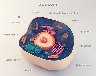 Anatomical structure of biological animal cell with organelles with annotations